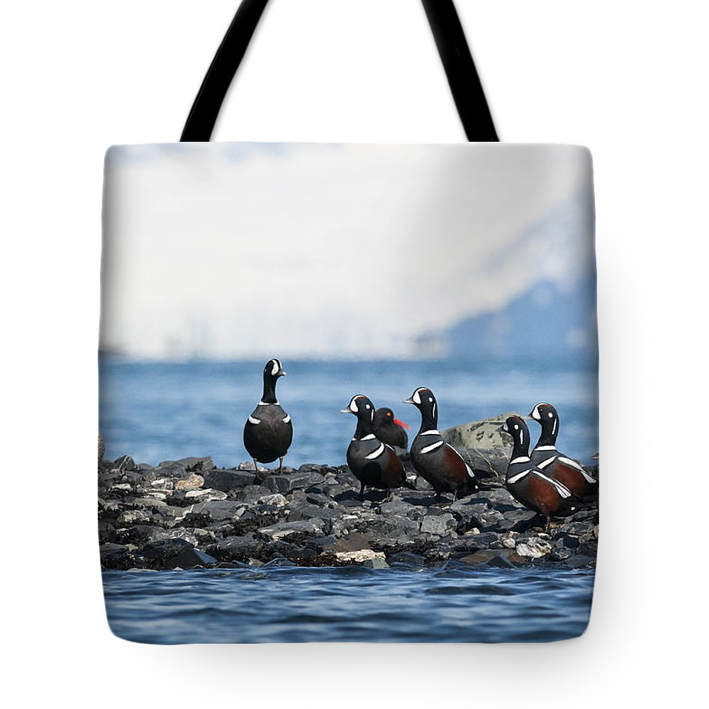 Harlequin Tote Bag featuring the photograph Harmony by Ted Raynor