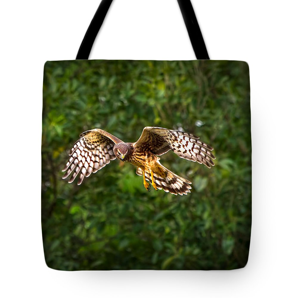 Harrier Tote Bag featuring the photograph Harrier Hunt by Mark Andrew Thomas
