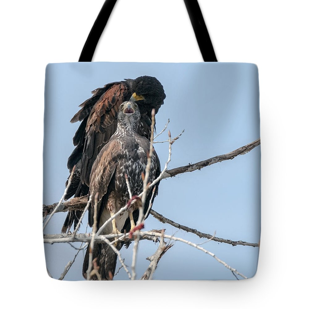 Harris Hawks Tote Bag featuring the photograph Harris Hawks by Tam Ryan