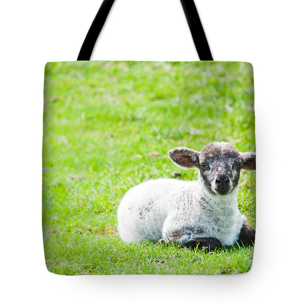 Sheep Tote Bag featuring the photograph Have You Any Wool by Cheryl Baxter