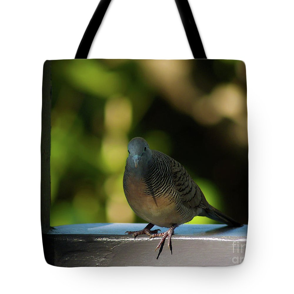 Dove Photography Tote Bag featuring the photograph Hawaiian Mourning Dove by Patricia Griffin Brett