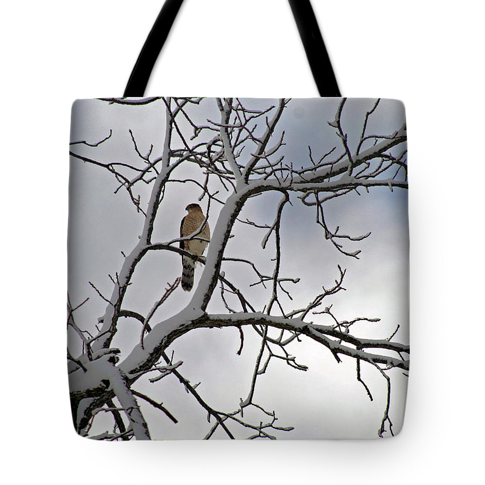 Winter Tote Bag featuring the photograph Hawk In Winter by Karen Adams
