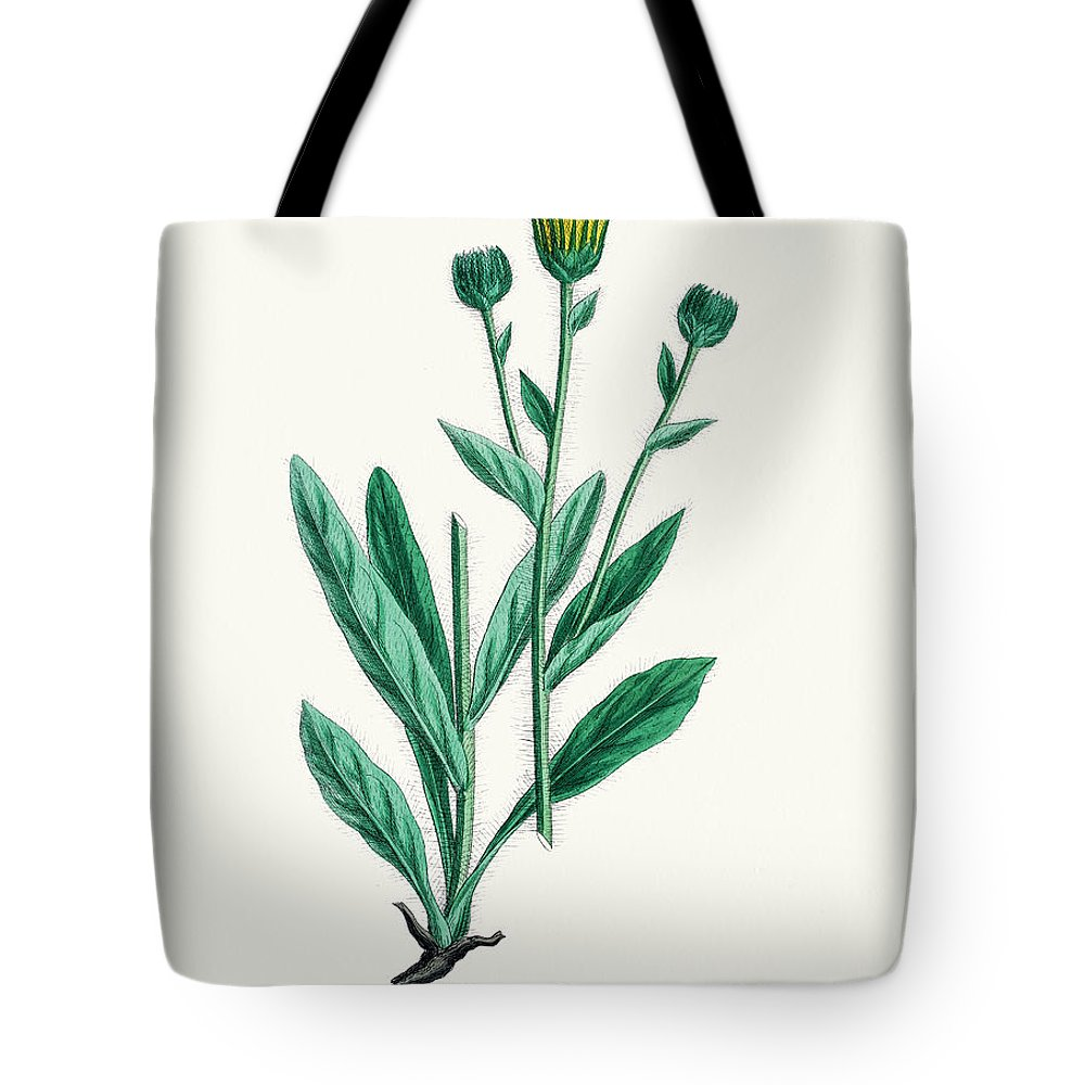 Art Tote Bag featuring the digital art Hawkweed Chicory Plant 19th Century by Mashuk