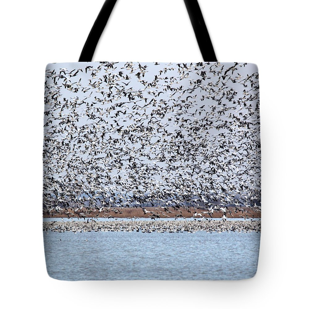 Geese Tote Bag featuring the photograph Heading North by Lynn Sprowl