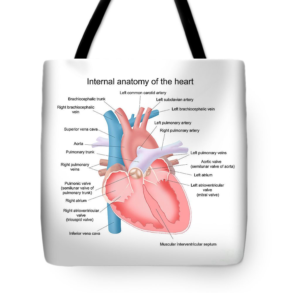 Art Tote Bag featuring the photograph Heart Anatomy by Carlyn Iverson