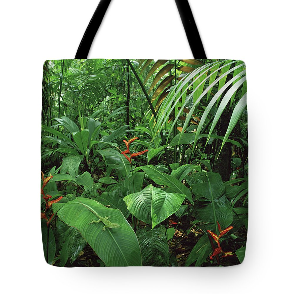 Color Image Tote Bag featuring the photograph Heliconia And Palms With Green Anole by Michael and Patricia Fogden
