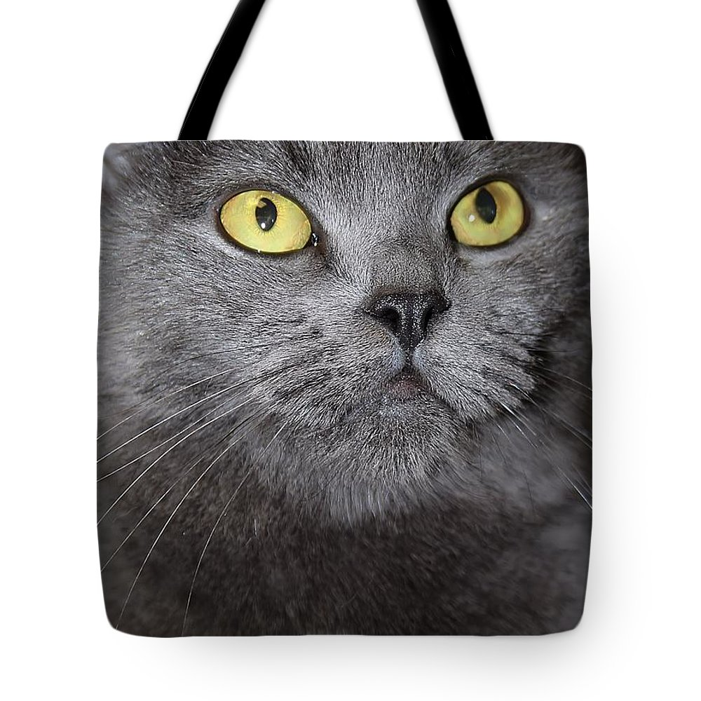 Yellow Eyes Tote Bag featuring the photograph Hello by Joyce Baldassarre