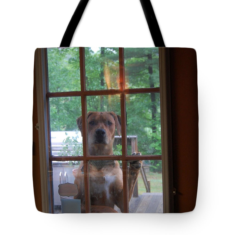 Ridgeback Tote Bag featuring the photograph Hello by Mim White