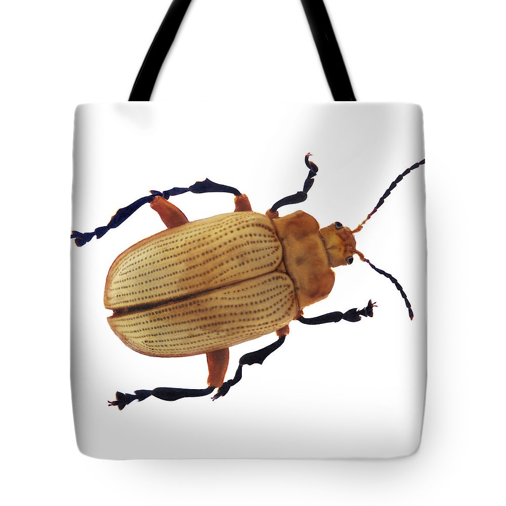 Light Tote Bag featuring the photograph Henry Lin Beetle by Henry Lin