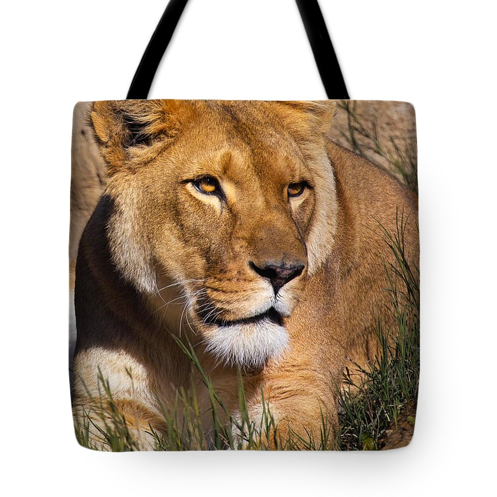Animal Tote Bag featuring the photograph Her Majesty by Randall Ingalls