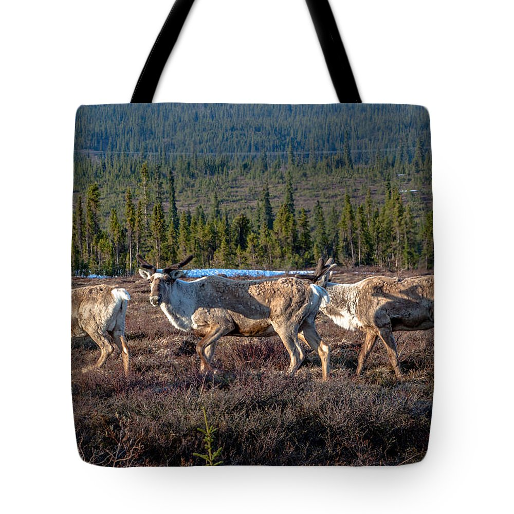 Broad Pass Tote Bag featuring the photograph Herd Of Broad Pass by Thomas Sellberg