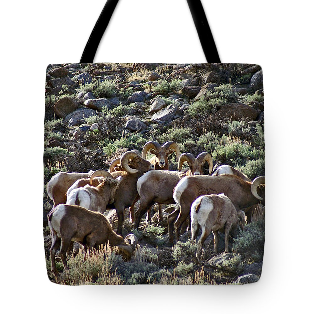 Altitude10k Photography Tote Bag featuring the photograph Herd Of Horns by Jeremy Rhoades