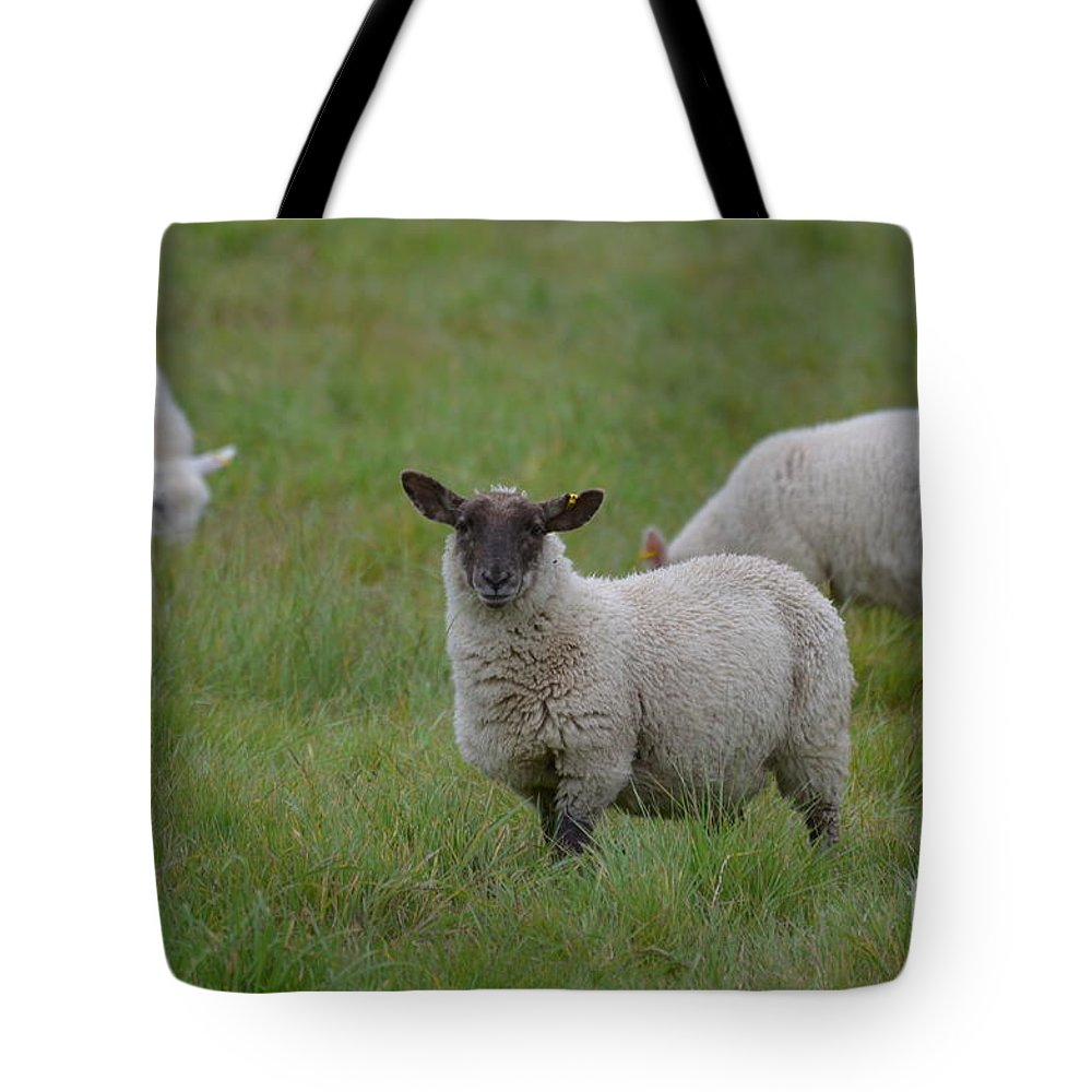 Designs Similar to Herd Of Sheep by DejaVu Designs