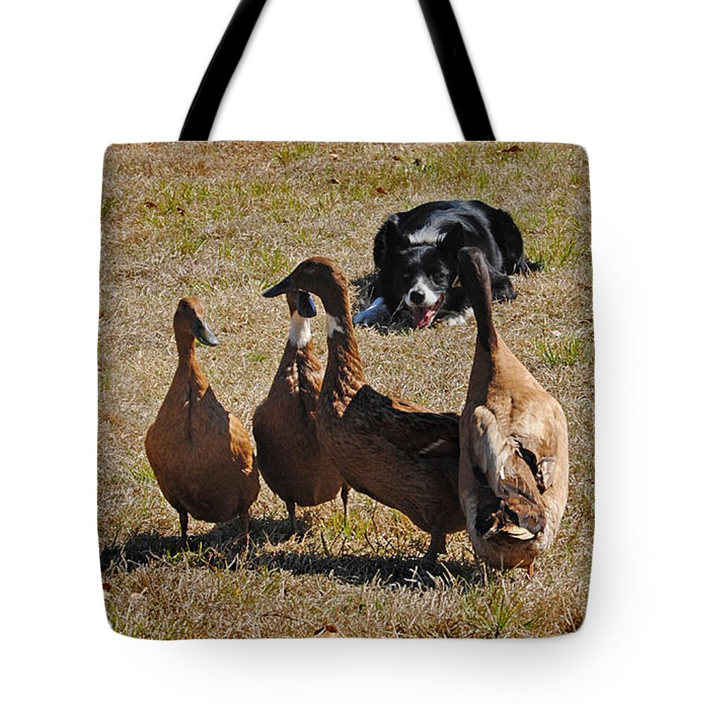 Nature Tote Bag featuring the photograph Herding Ducks by Skip Willits
