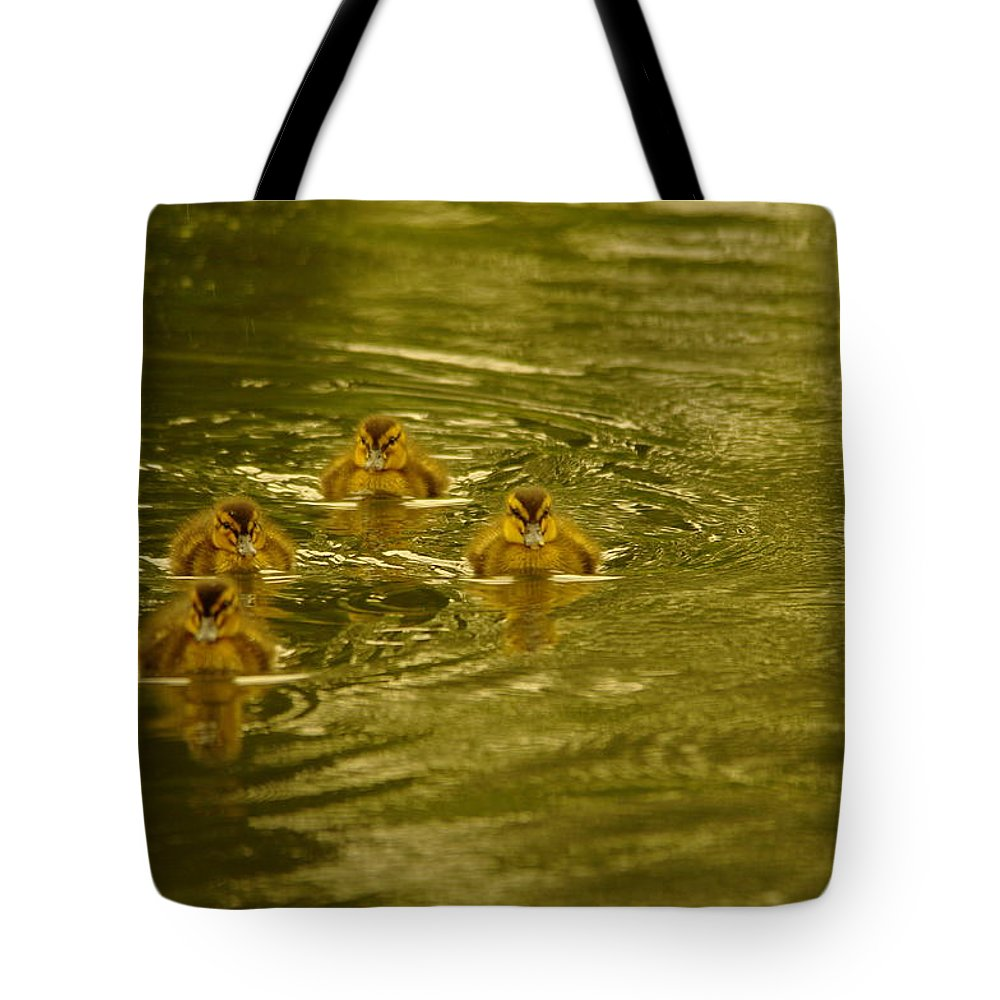 Baby Ducks Tote Bag featuring the photograph Here Comes The Little Bread Beggers by Jeff Swan
