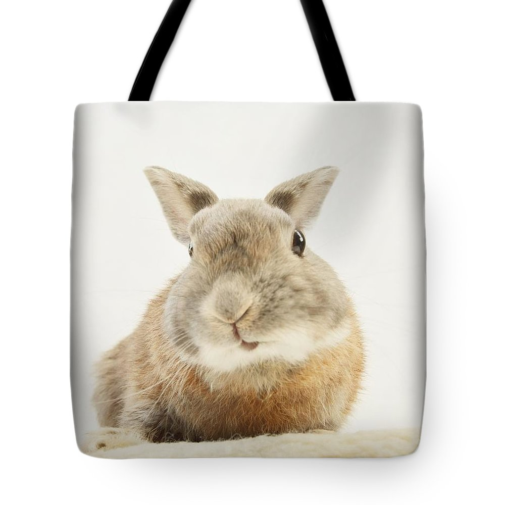 Rabbit Tote Bag featuring the photograph Here I Am by Sonya Kanelstrand