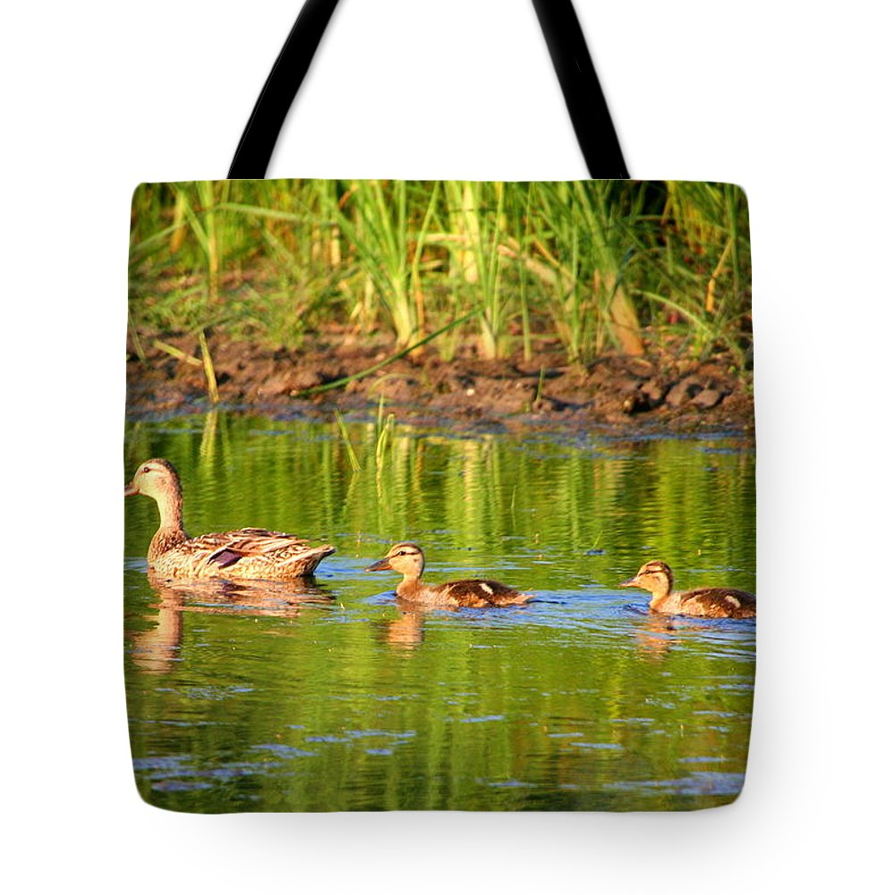 Mallard Tote Bag featuring the photograph Here We Come by Laurel Talabere
