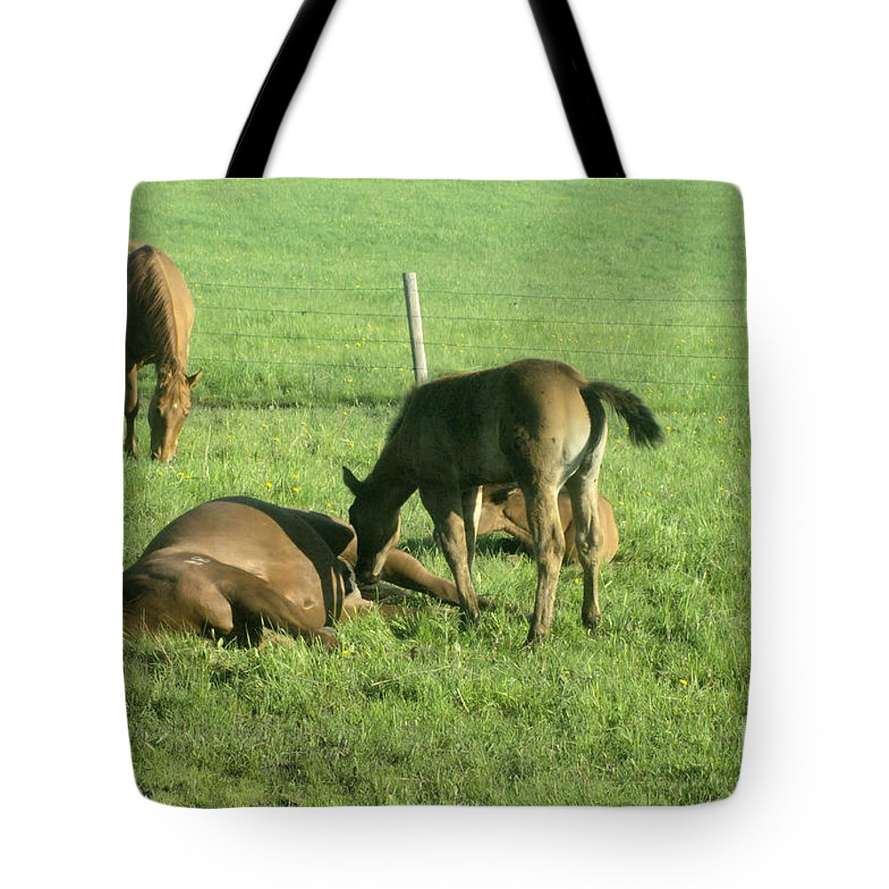 Horses Tote Bag featuring the photograph Hey Mom Wake Up by Jeff Swan