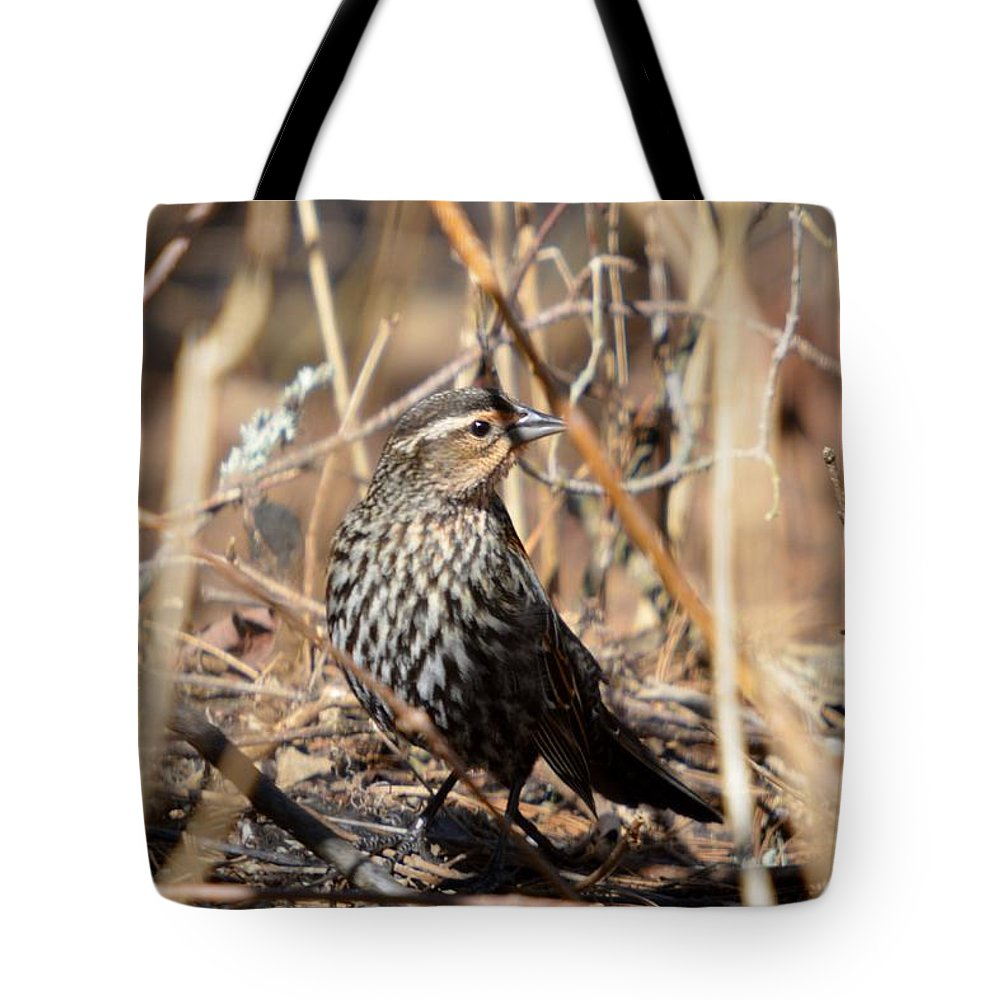 Red-winged Blackbird Tote Bag featuring the photograph Hidden Surprise by Thomas Phillips