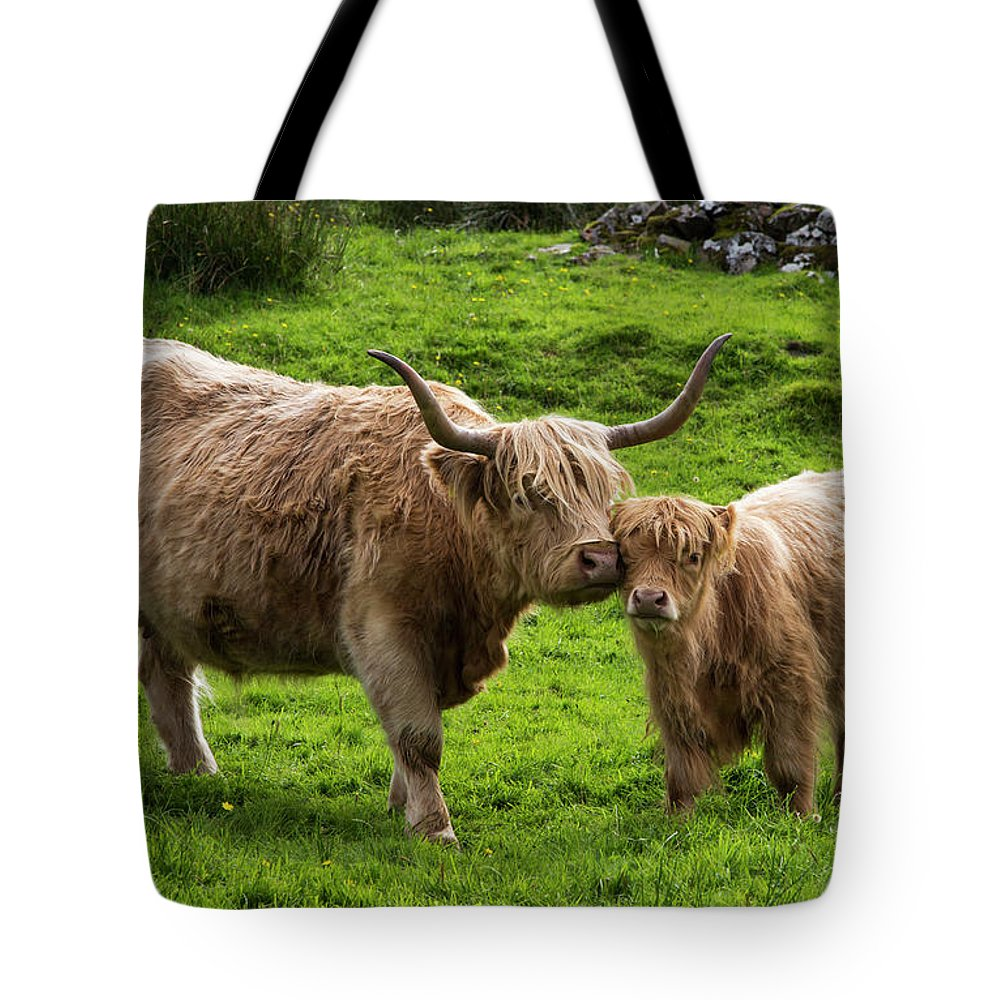 Horned Tote Bag featuring the photograph Highland Cattle And Calf by John Short / Design Pics