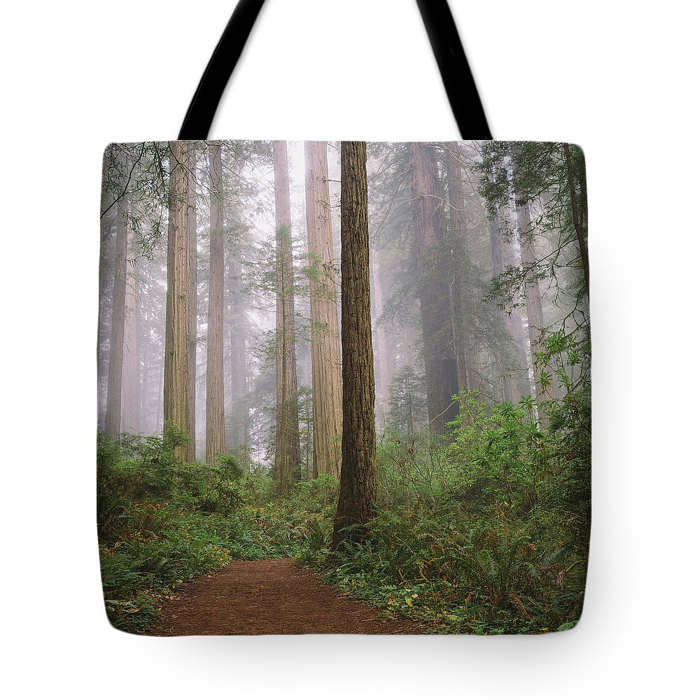 Tranquility Tote Bag featuring the photograph Hiking Through Californias Redwoods by David Hoefler