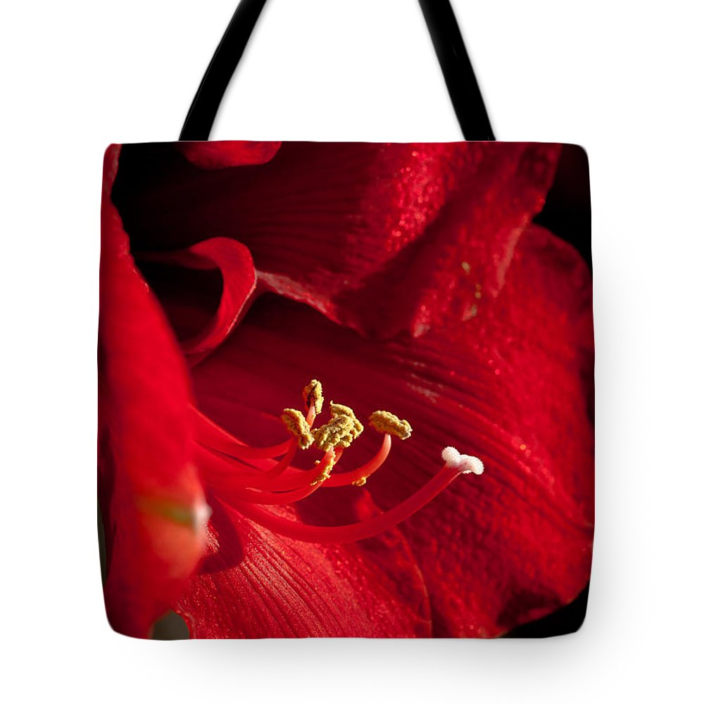 Hippeastrum Tote Bag featuring the photograph Hippeastrum by Ralf Kaiser