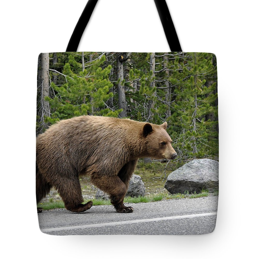 Yellowstone Tote Bag featuring the photograph Hmmm .... What's On The Other Side Of The Road Today? by Bruce Gourley