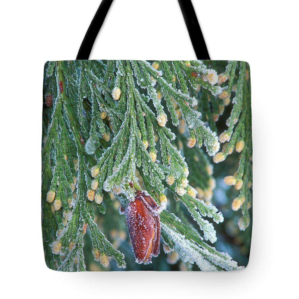 North America Tote Bag featuring the photograph Hoarfrost On Pine Bough Yosemite National Park by Dave Welling
