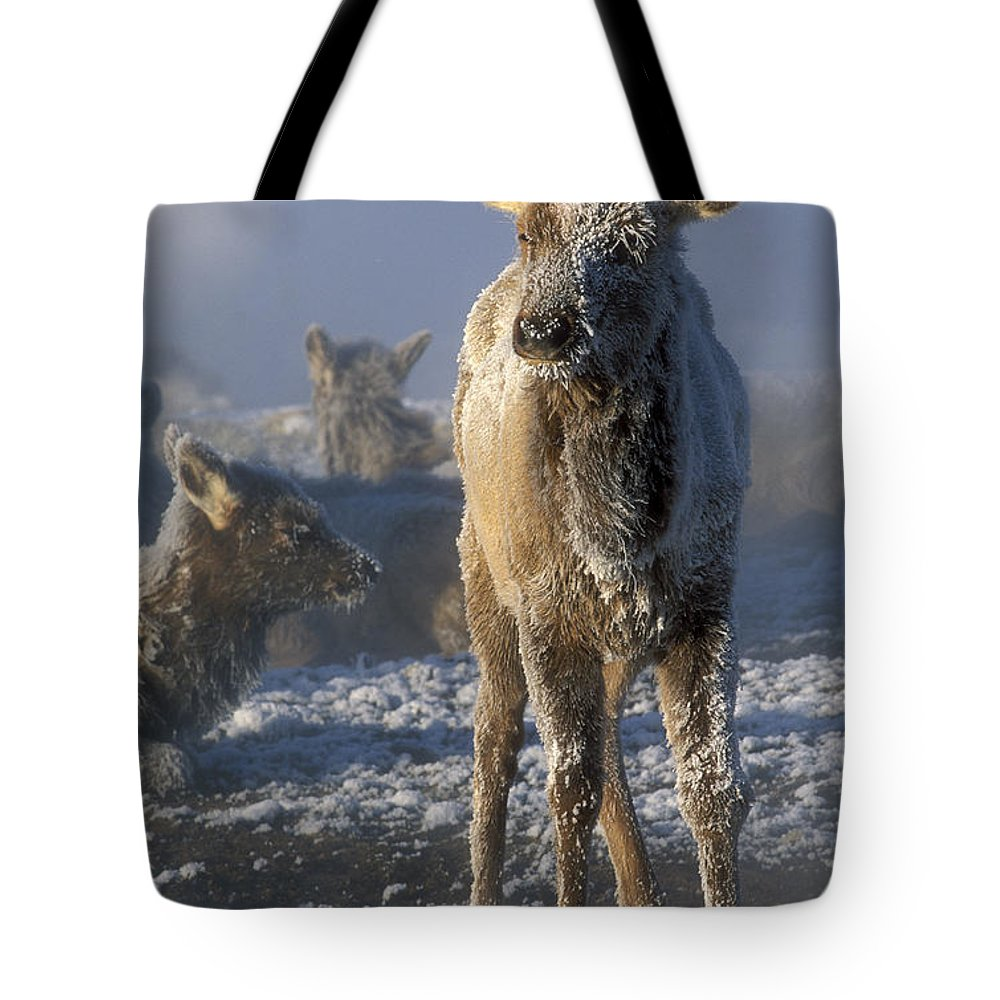 Yellowstone Tote Bag featuring the photograph Hoarfrosted Elk Calf by Sandra Bronstein