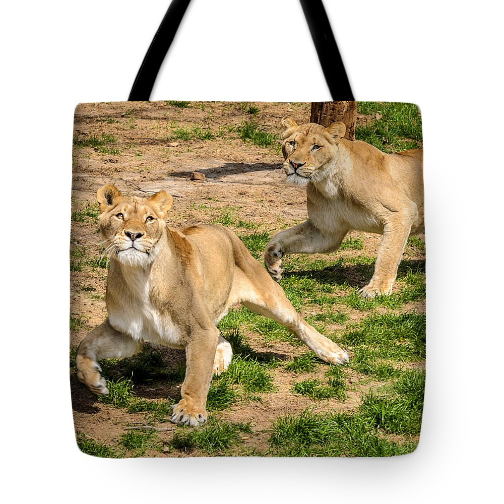 Lion Tote Bag featuring the photograph Hokie Pokie by Pat Scanlon