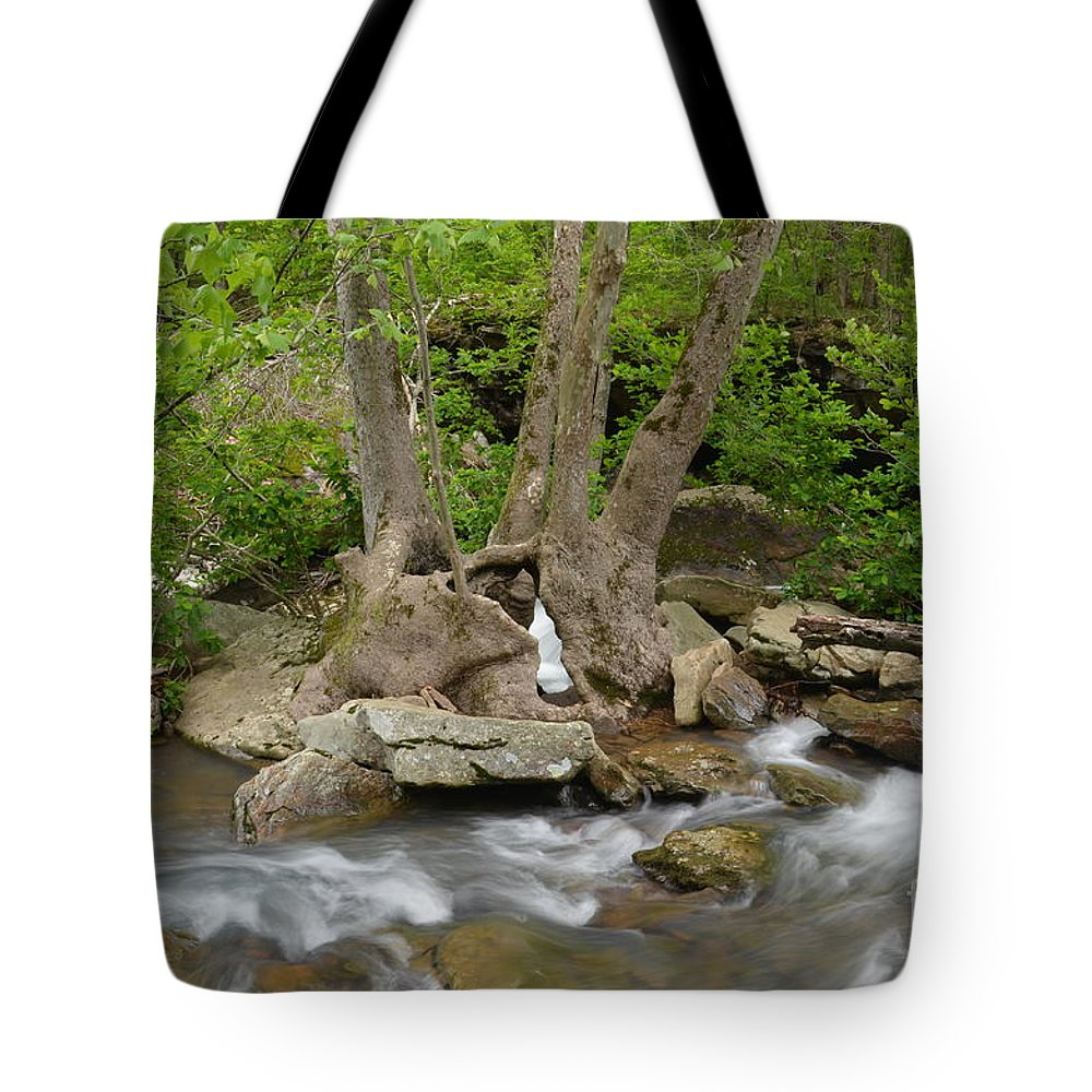 Tree Tote Bag featuring the photograph Hollow Tree by Deanna Cagle