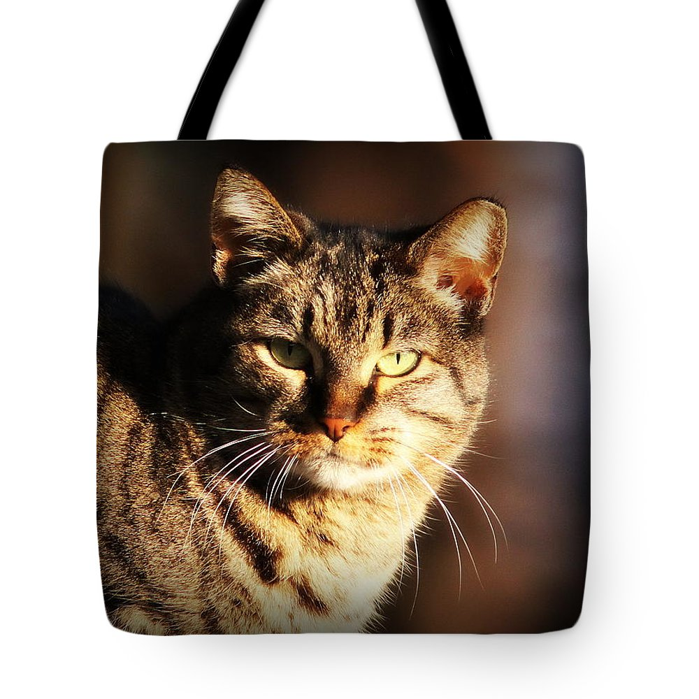 Animal Tote Bag featuring the photograph Homeless Cat by Travis Truelove