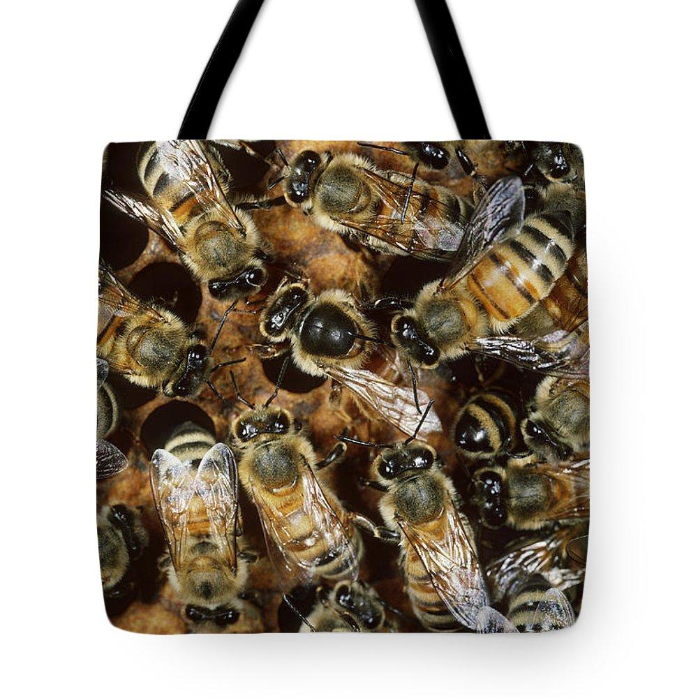 Honeybee Tote Bag featuring the photograph Honeybees With Queen by Scott Camazine