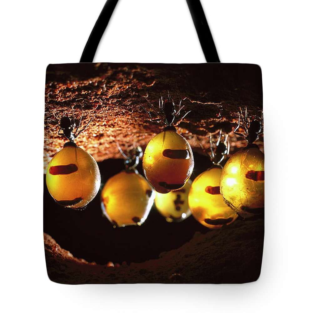 Ai Tote Bag featuring the photograph Honeypot Ants by Reg Morrison