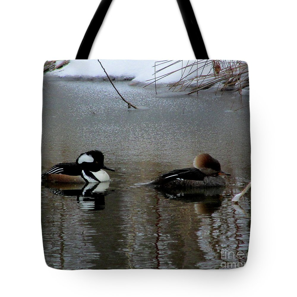 Male And Female Hooded Merganser Mates Chesapeake Bay Water Foul North American Birds Rare Waterfoul Rare Birds Rare Ducks Aquatic Birds Wildlife Refuge Endangered Species Black And White Ducks Crested Ducks Hooded Ducks Water Birds Diving Ducks Diving Birds Chesapeake Biodiversity Winter Birds Cheapest Image License Affordable Image License Budget Image License Lowest Image License Price Cheap Image Licensing Nature Image License Cheap Nature Prints Tote Bag featuring the photograph Hooded Merganser Mates by Joshua Bales