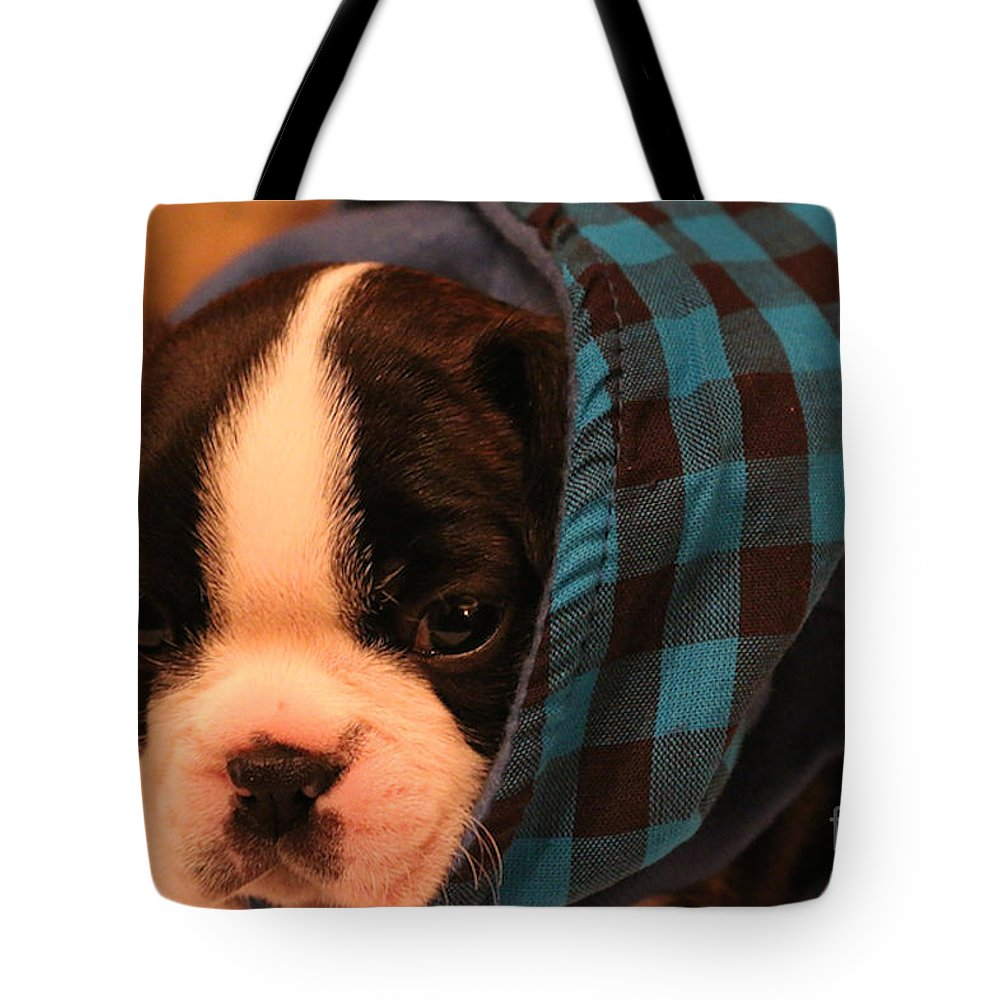 Mammal Tote Bag featuring the photograph Hoodie by Susan Herber