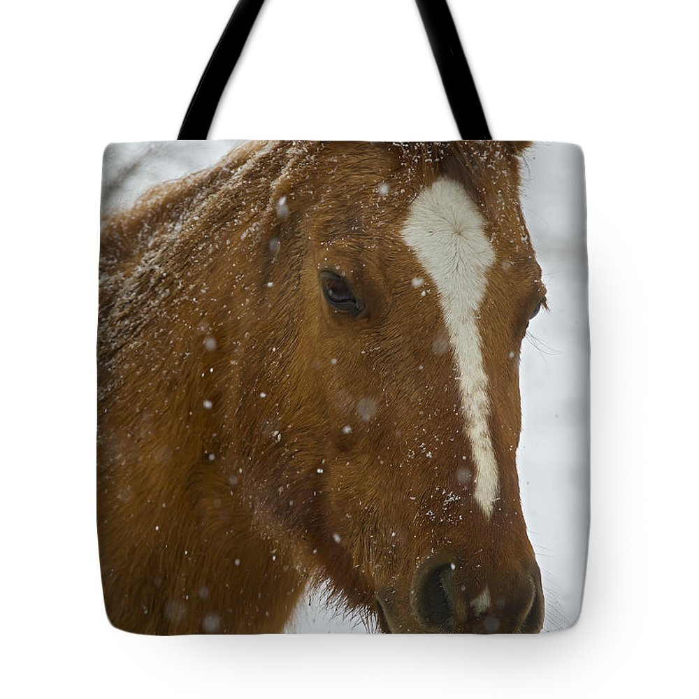 Horse Tote Bag featuring the photograph Horse In Snow  #4651 by J L Woody Wooden