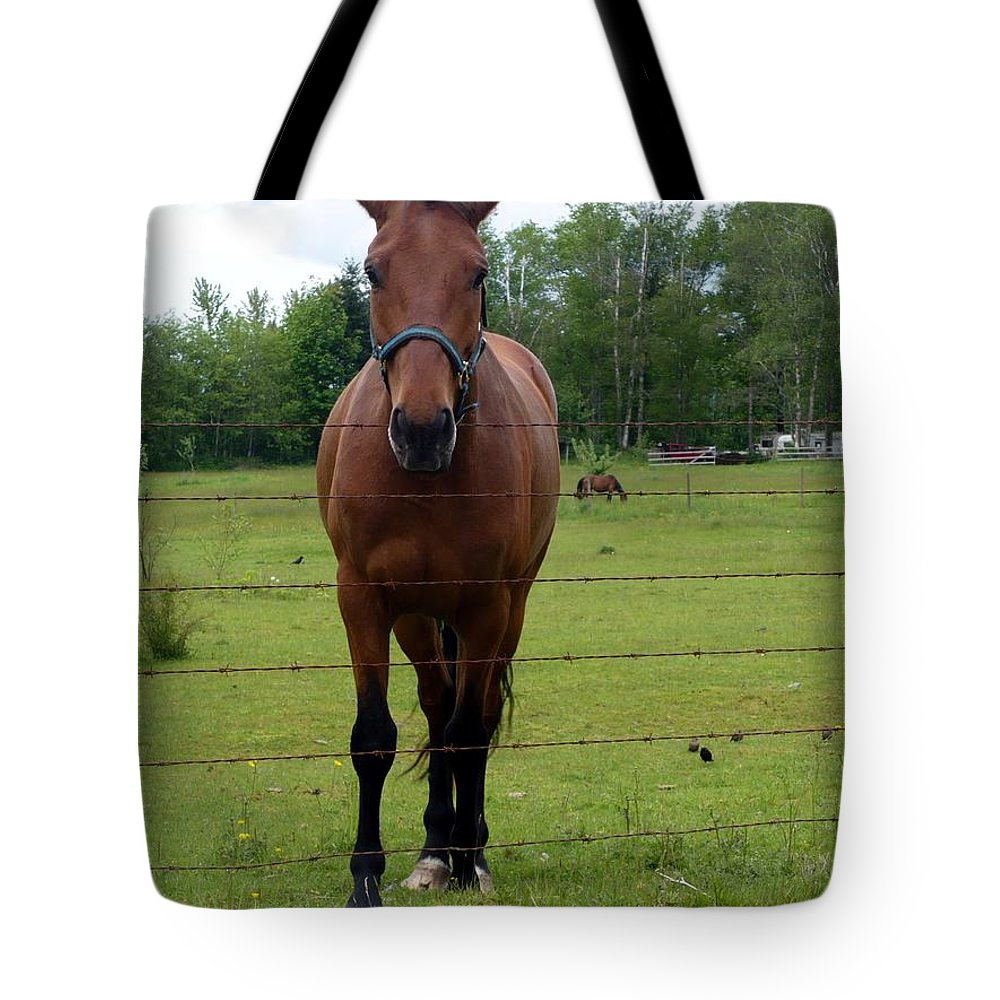 Horse Tote Bag featuring the photograph Horse by Nicki Bennett