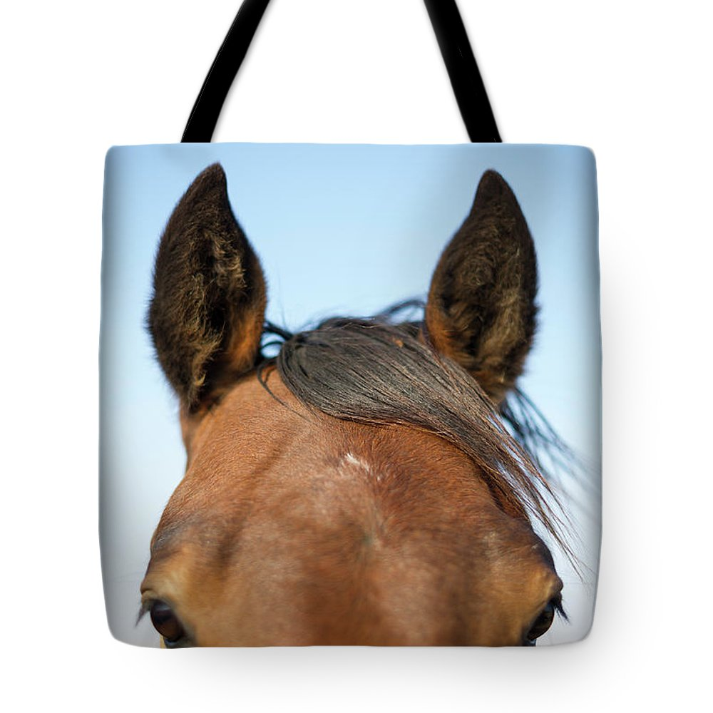 Horse Tote Bag featuring the photograph Horse Standing In Pasture In Autumn by Chris Hendrickson