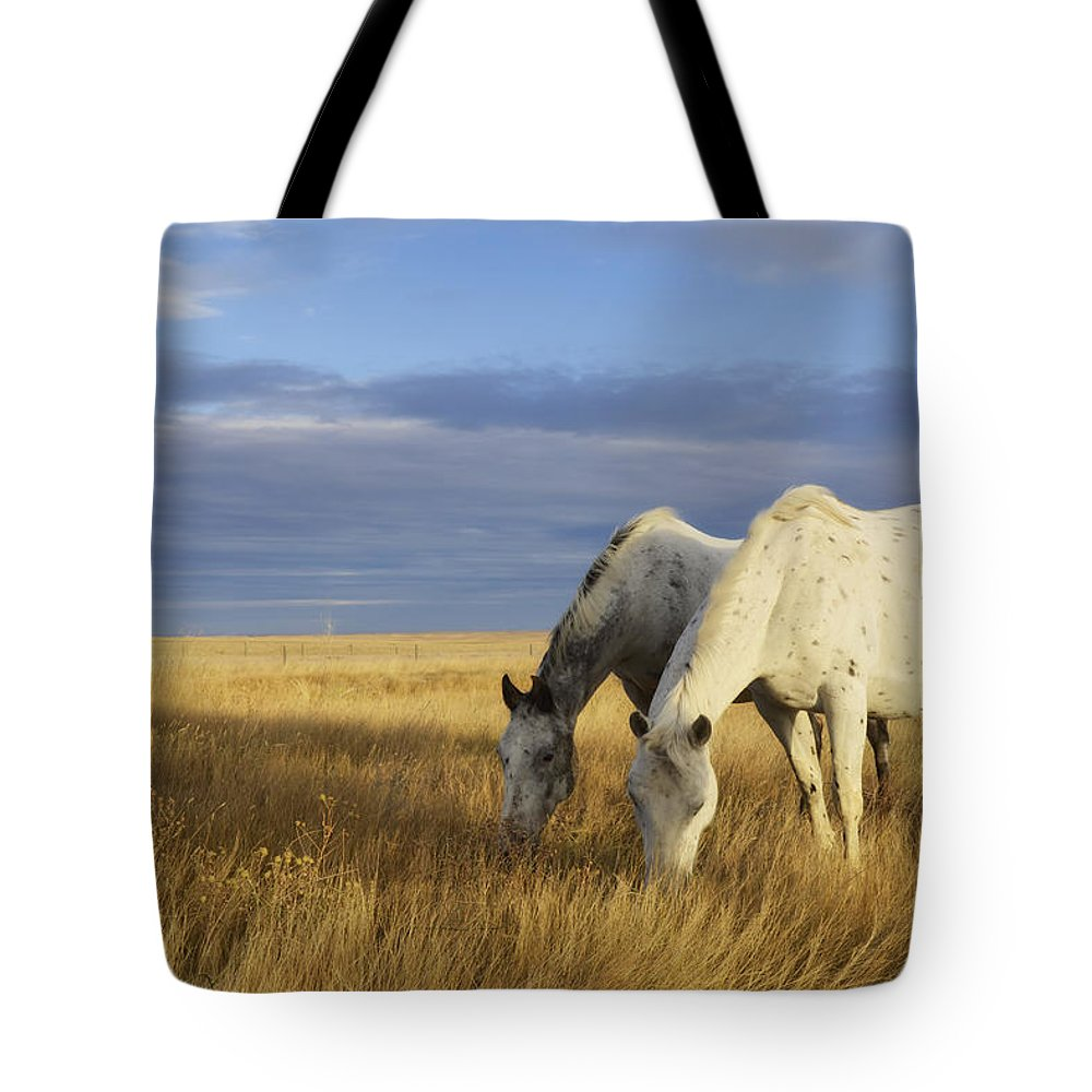 Grazing Tote Bag featuring the photograph Horses Grazing In Cypress Hills by Peter Carroll