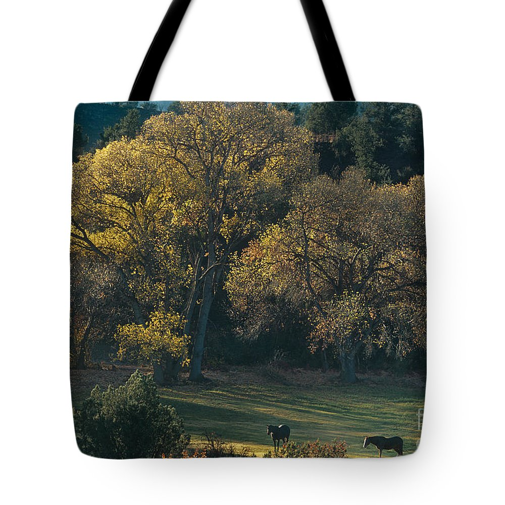 Dave Welling Tote Bag featuring the photograph Horses In A Backlit Field With Fall Colored Trees Sedo by Dave Welling