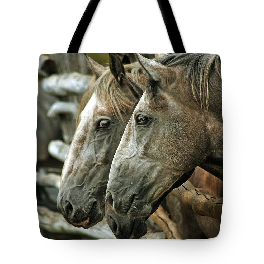 Horse Tote Bag featuring the photograph Horses Looking Through The Fence by Angel Ciesniarska
