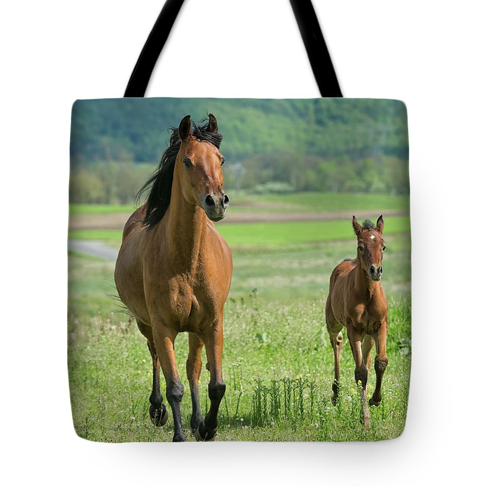 Horse Tote Bag featuring the photograph Horses Running In Summer Pasture, Mare by Catnap72
