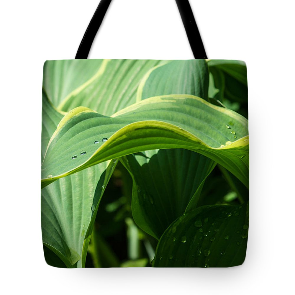 Beautiful Tote Bag featuring the photograph Hosta Leaves After The Rain by Alexander Senin