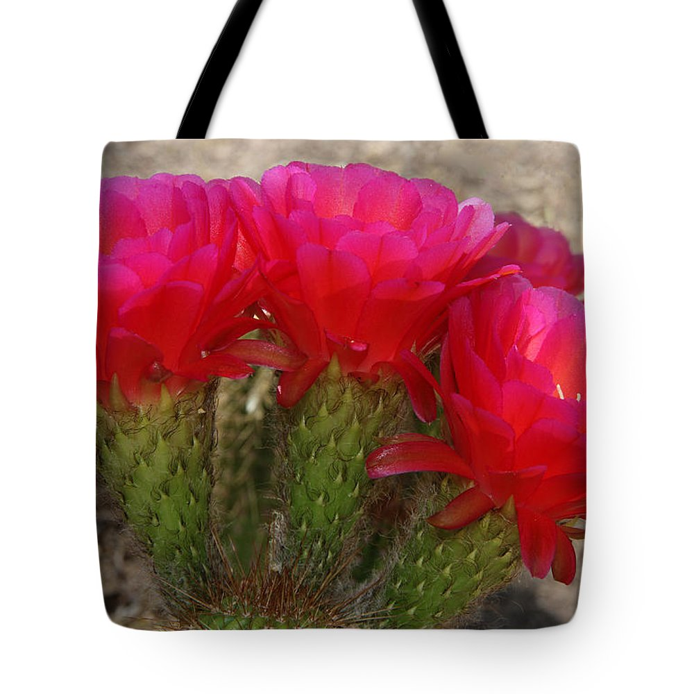 Cactus Tote Bag featuring the photograph Hot Hot Hot by Tammy Espino