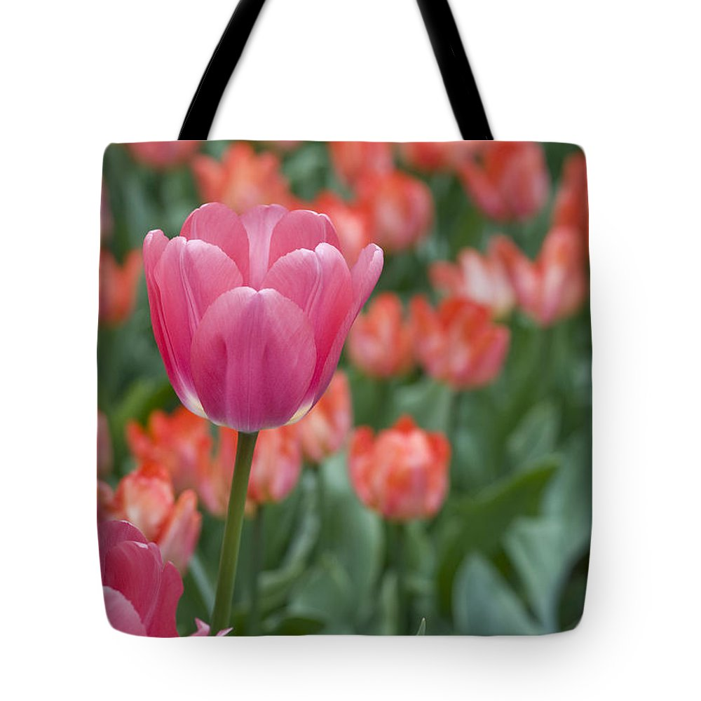 Bloom Tote Bag featuring the photograph Hot Pink by Juli Scalzi
