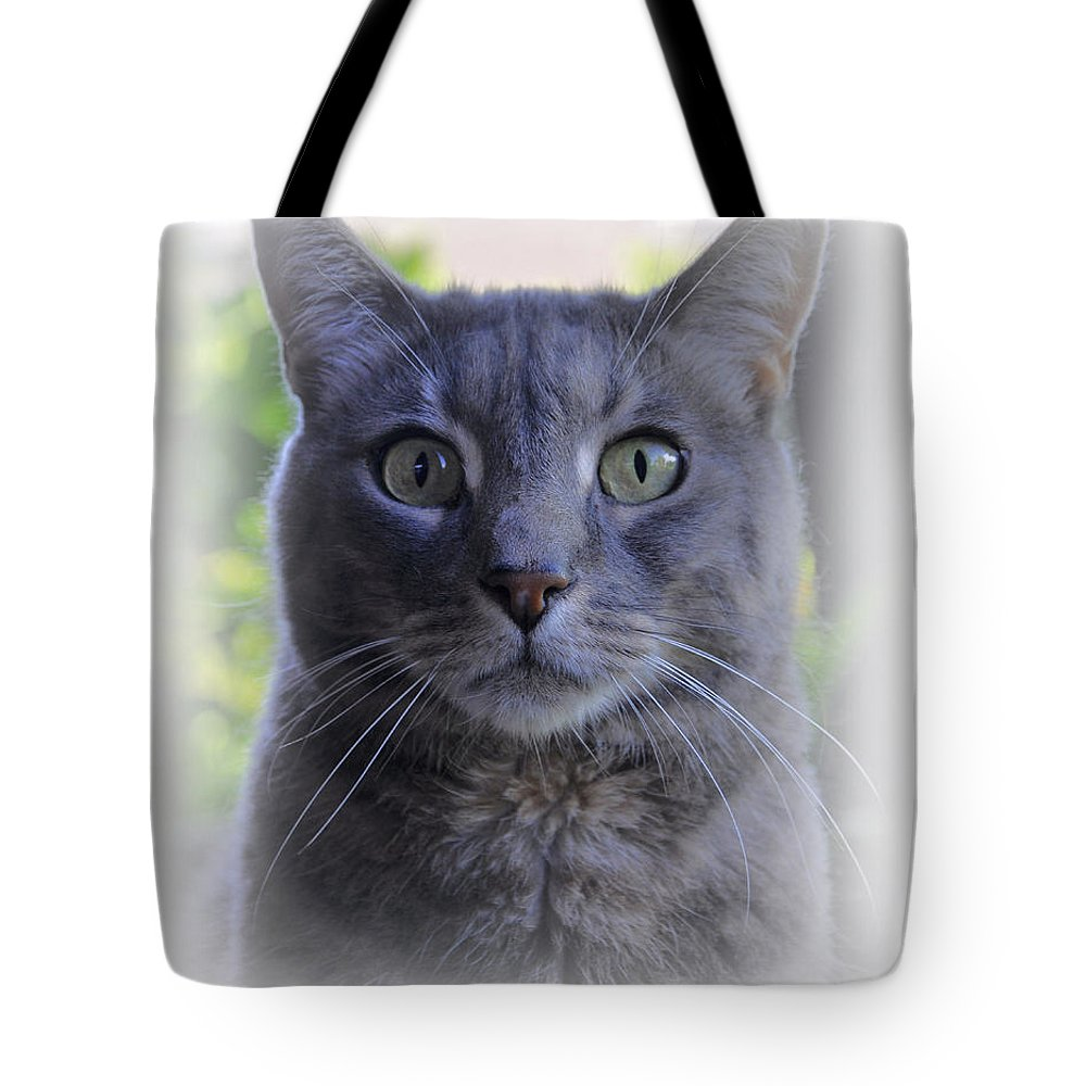 Animals Tote Bag featuring the photograph House Cat Stare by Deborah Good