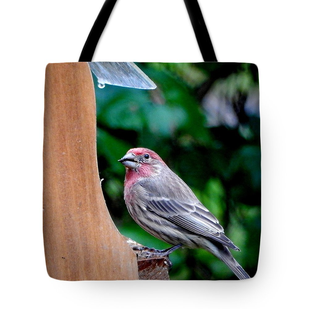 Red Headed Bird Tote Bag featuring the photograph House Wren by Betty-Anne McDonald