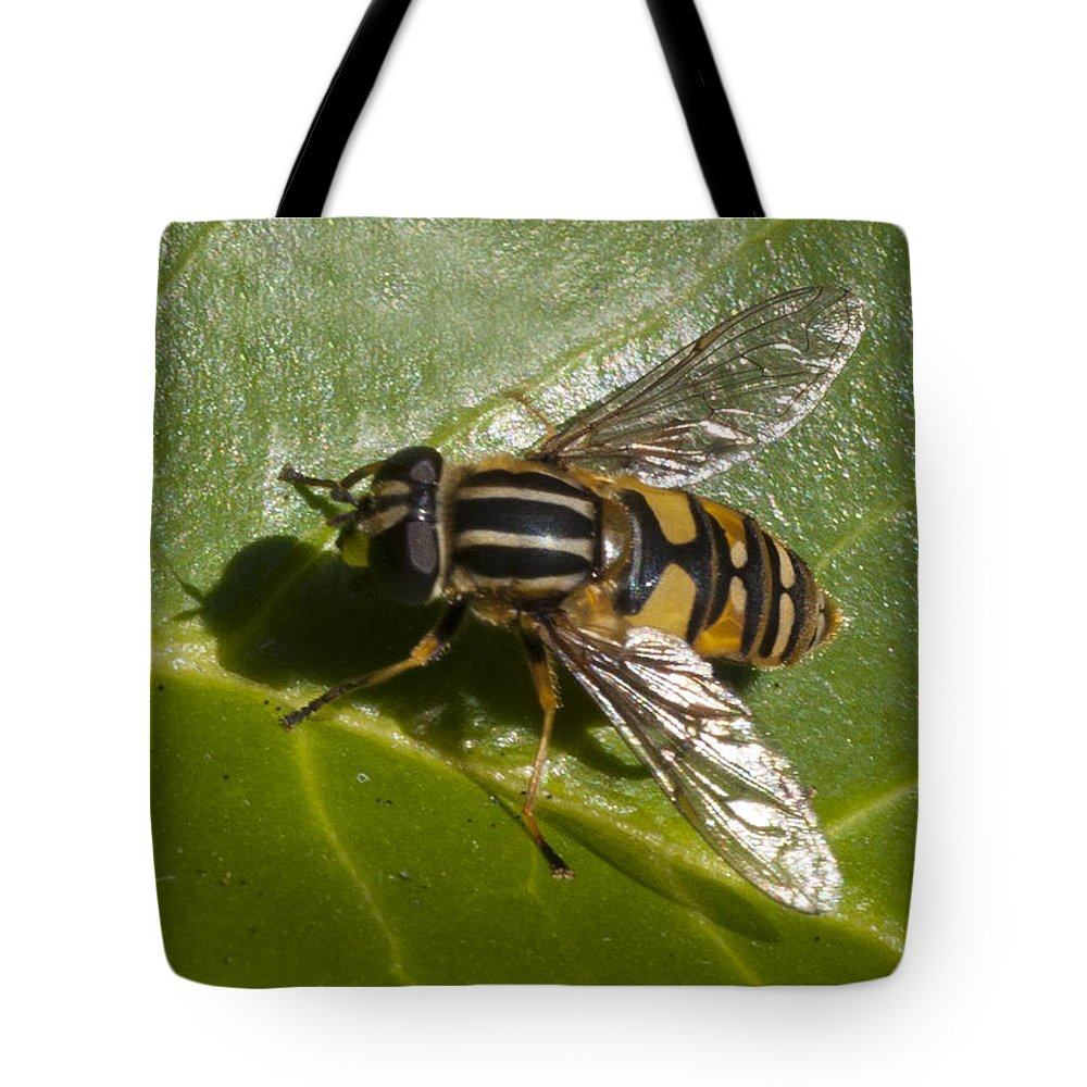 Hoverfly Tote Bag featuring the photograph Hoverfly by Richard Thomas