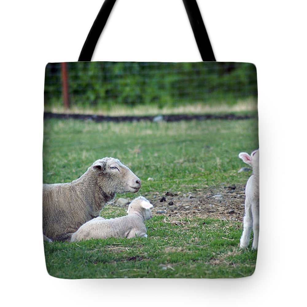 Sheep Tote Bag featuring the photograph Howlin' Like A Wolf by Perri Kelly